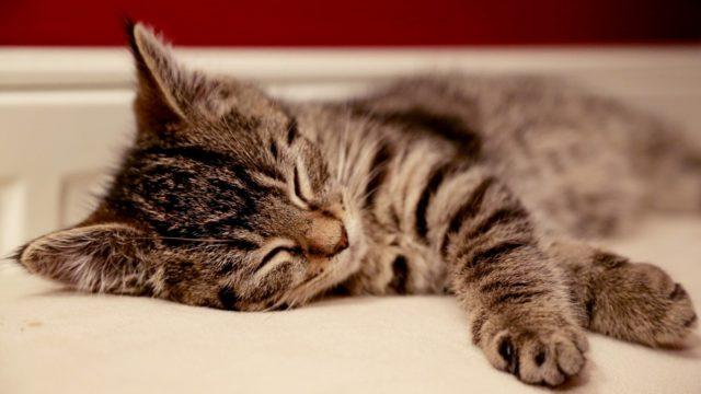 スヤスヤと眠るネコチアンの画像