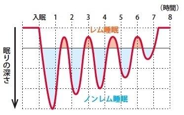 レム睡眠とノンレム睡眠の周期